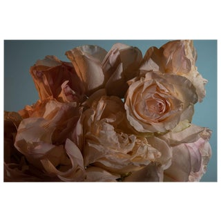 """Pink Rose Still Life Photograph - 20"""" X 30"""" For Sale"""