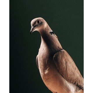 """Contemporary Limited Edition Ring Necked Dove Print by Brendan Burden (32x40"""") For Sale"""