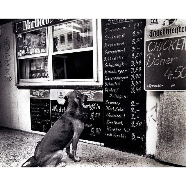 The Dresden Dog Photograph by Fernando Natalici - Image 1 of 2