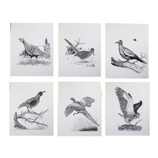 1970's Limited Edition Dick Calkins Wildbird Sketches - Set of 6