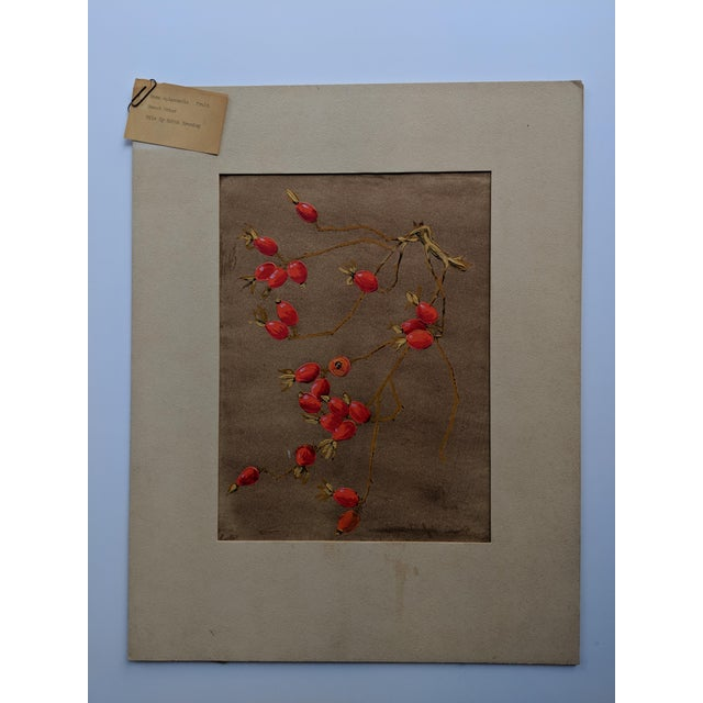 Rosa Eglanteria Botanical Oil Painting For Sale In San Francisco - Image 6 of 6