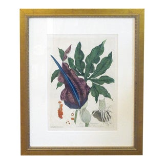 Well-Executed French Hand-Colored Engraving of La Serpentaire From a 'La Botanique Mise a La Portee De Tout Le Monde' by Genevieve De Nangis Regnault For Sale