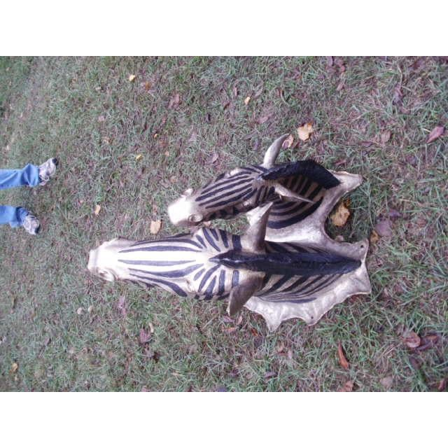 Cast Bronze Zebra Heads - A Pair For Sale - Image 4 of 5