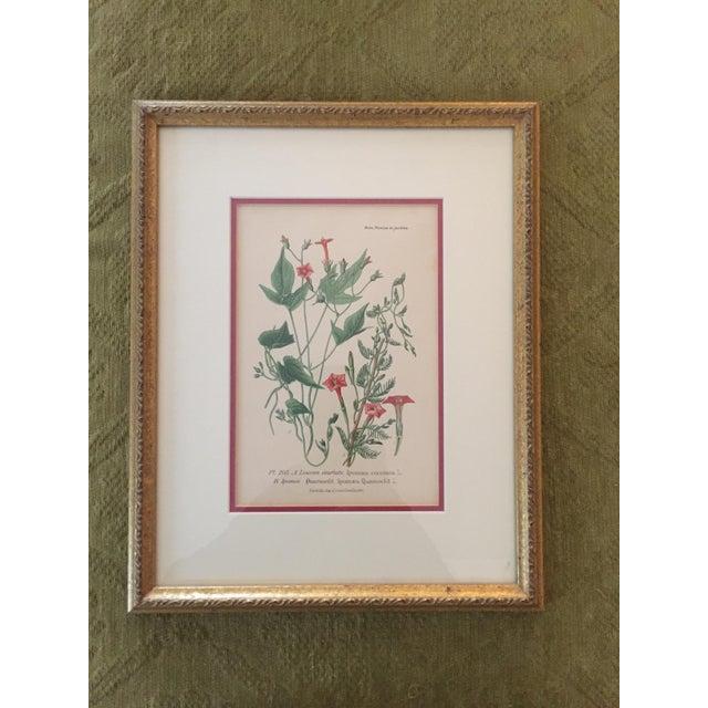 Botanical Prints - Image 4 of 4