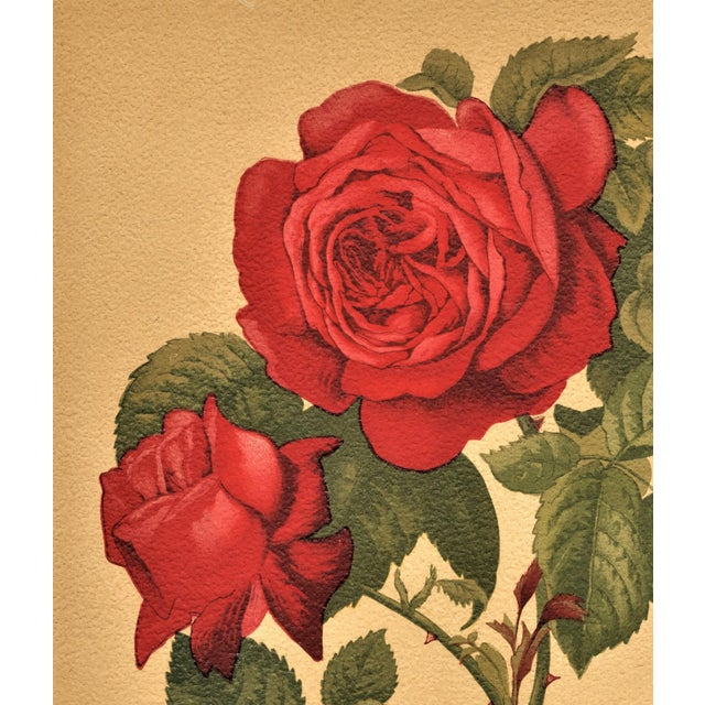 1880 Antique Rose Botanical Chromolithograph - Image 4 of 4