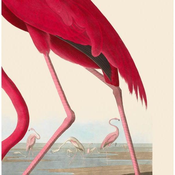 American John James Audubon Print, American Flamingo For Sale - Image 3 of 6