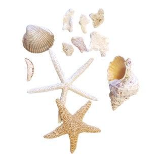 Shell, Starfish & Coral MIX - 11 Pc. Set