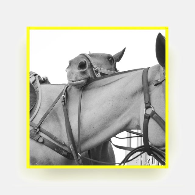 Contemporary Friendship by Holly Roesch Contemporary Photograph in Yellow Acrylic Frame, Small For Sale - Image 3 of 3