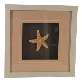 Starfish Shadow Box For Sale