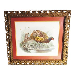 19th Century Vintage Hand Colored Phasianus Colchicus Pheasant Lithograph Print For Sale