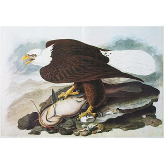 1966 XL White-Headed Eagle Print by Audubon For Sale