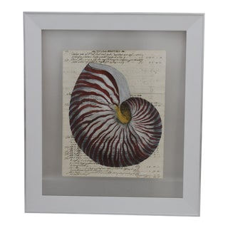 Hand Painting of Red Nautilus on Circa 1719 Manuscript Paper Framed With Reversing View For Sale