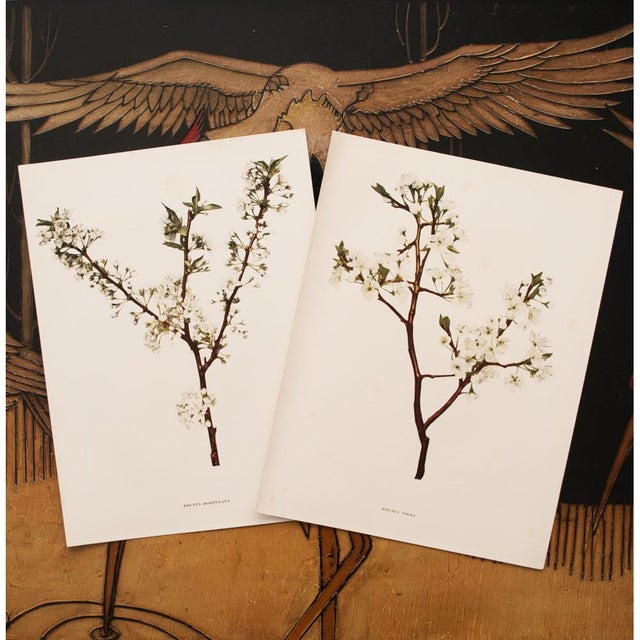 Printmaking Materials 1900s Original Cherry Blossom Photogravures by Hedrick - a Pair For Sale - Image 7 of 11