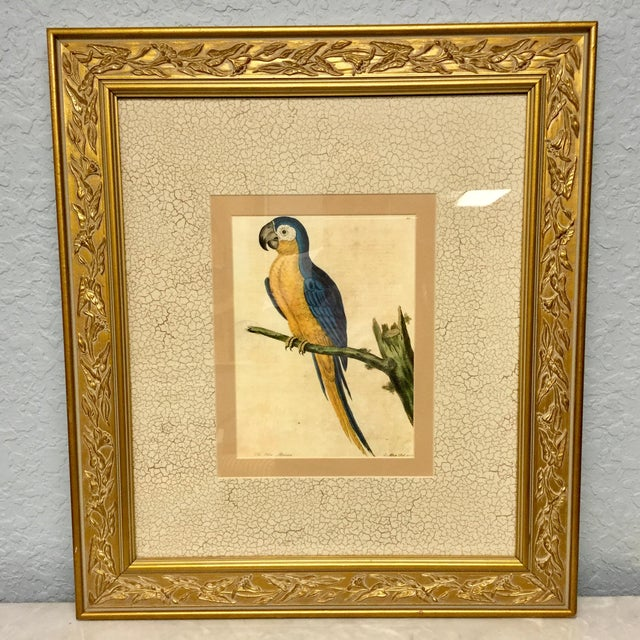 Vintage Framed Blue Macaw Lithograph Print For Sale - Image 9 of 9