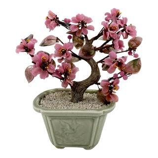 Pink Jade Bonsai Flower Tree For Sale