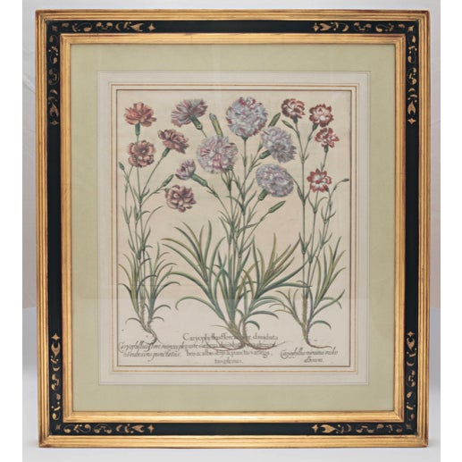 "Paint Basil Besler ""Caryophyllus Flore"" Botanical Print For Sale - Image 7 of 7"