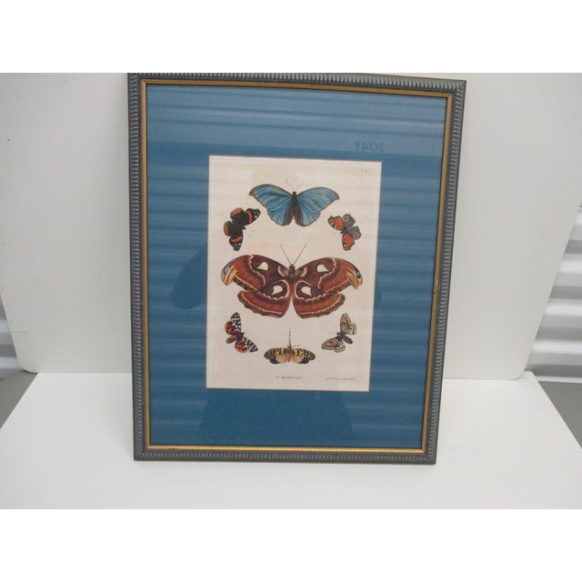 Vintage Print Framed in Wedgewood Blue Color Wood Frame With Glass Cover For Sale - Image 4 of 10