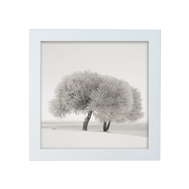 "Ari Salmela ""Different Season"" Framed Photo Print - Image 1 of 3"