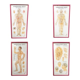 Framed Anatomy Acupuncture Wall Chart Prints - Set of 4 For Sale