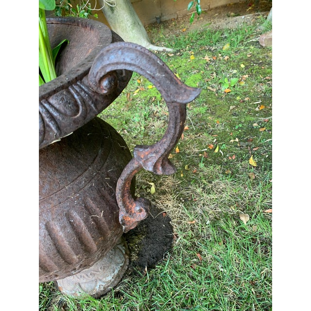 Antique Iron Urn With Handles For Sale - Image 4 of 6