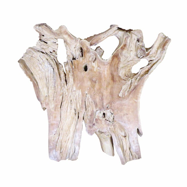 2010s Organic Modern Natural Teak Root Sculpture For Sale - Image 5 of 7