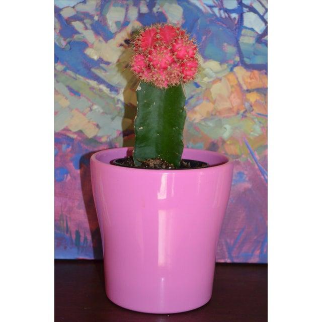 Petite Pink German Planter - Image 5 of 11