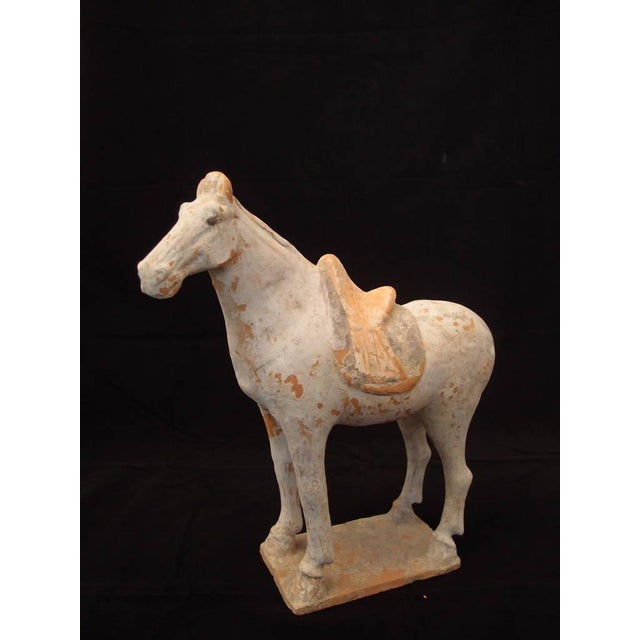 Asian Tang Dynasty Painted Pottery Model of a Horse For Sale - Image 3 of 6