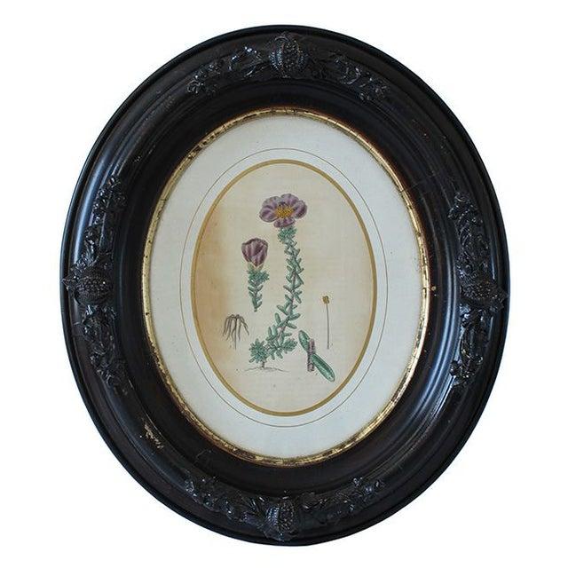 Civil War-Era Botanical Prints - Set of 4 - Image 2 of 7