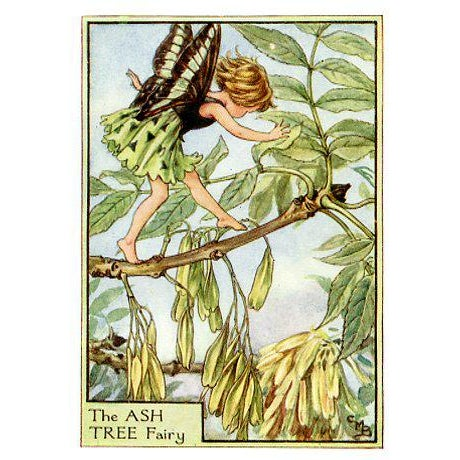 Set of 3 original prints from the 1930s featuring Flower Fairies of the Trees. Based on illustrations by the English...