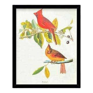 Custom Black Wood Frame of Authentic Vintage John James Audubon Cardinal Bird & Botanical Print For Sale