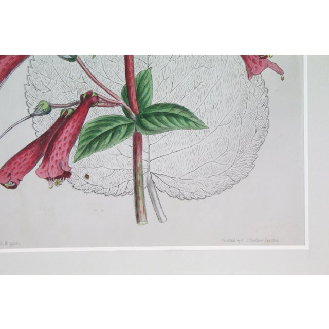 Illustration 20th Century Realist Pink Botanical Print For Sale - Image 3 of 7