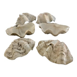 Original California Trader Vic Restaurant Clam Shells - Set of 6 For Sale