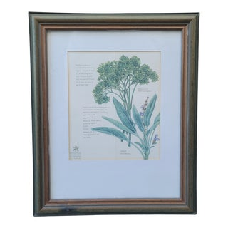 Late 20th Century Botanical Parsley and Sage Art Print, Framed For Sale