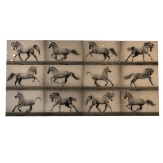 Large Scale Horse Photograph For Sale
