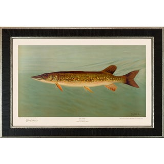 American Fish 37 the Pike by Harris CFA Edition Giclee Print For Sale