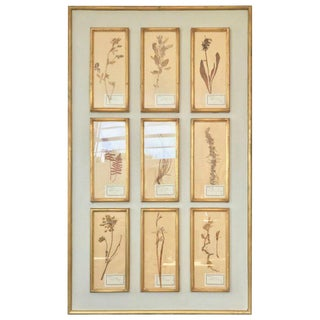 1940s Vintage French Botanical Herbier Framed Collage For Sale