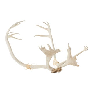 Set of Vintage Caribou Antlers With Twine For Sale
