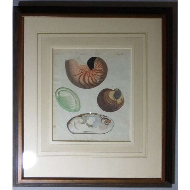 Antique Framed Nautical Engravings - Set of 6 - Image 5 of 8