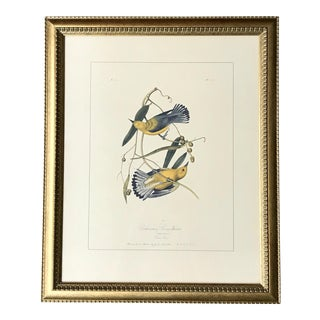 Late 20th Century Audubon Swamp Warblers Engraved Plate Print For Sale