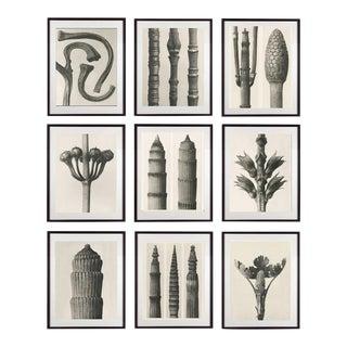 Blossfeldt Botanical Photographs - Set of 9