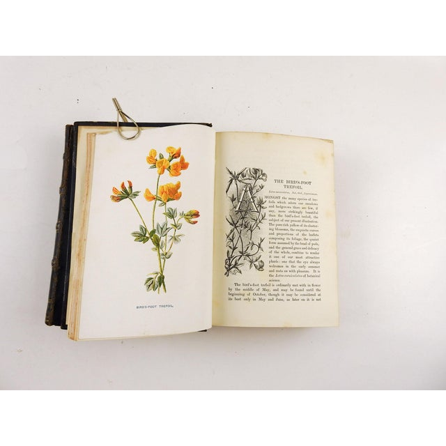 1900 - 1909 Familiar Wild Flowers 1902 - 2 Volumes For Sale - Image 5 of 11