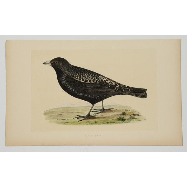 Antique Hand-Colored Aviary Wood Engravings - A Pair - Image 2 of 9