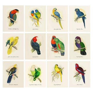 1884 Alexander Francis Lydon, Parrot Reproduction - Set of 12, N1 For Sale