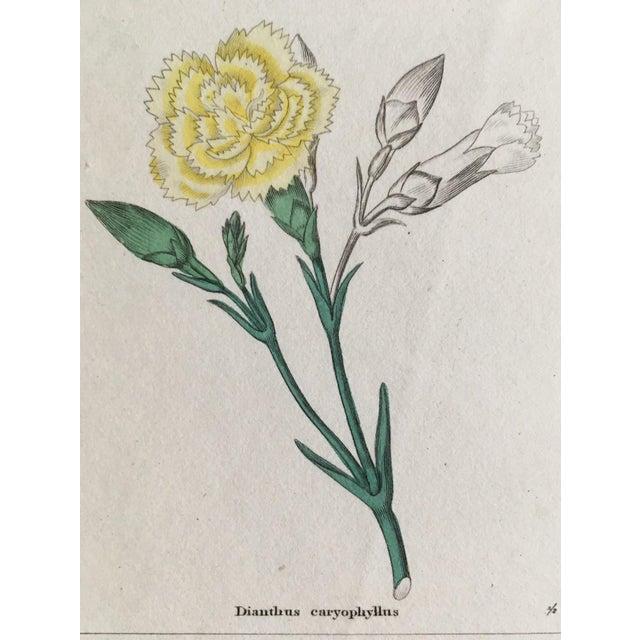Illustration Botanicals by Benjamin Maund C. 1854 For Sale - Image 3 of 8