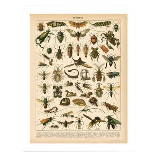 Vintage Insects Archival Print