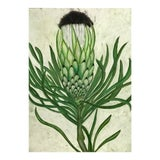 Image of Botanical Pastel Drawing For Sale