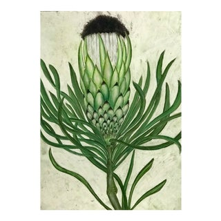 Botanical Pastel Drawing For Sale