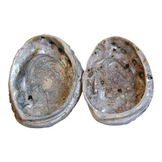 Natural Iridescent Abalone Seashells - Pair