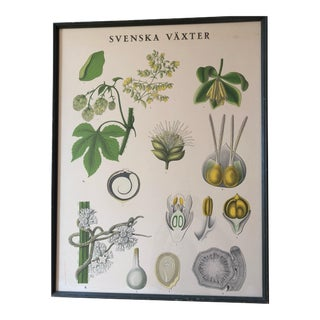 Swedish Botanical Poster For Sale