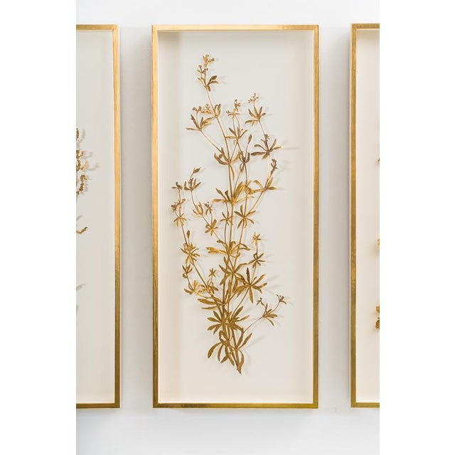 The Illuminated Herbarium Triptych combines drawing, plants and illuminated manuscripts. It consists of a growing library...